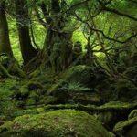 Earth Strength Bushcraft